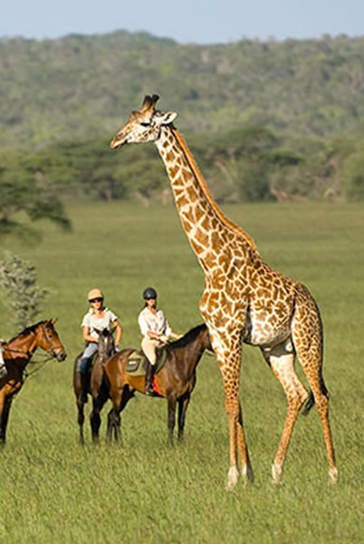 Image of a horse back safari at Plettenberg Bay Game Reserve inside the Belle Balance Bush Hideaway home page of the website