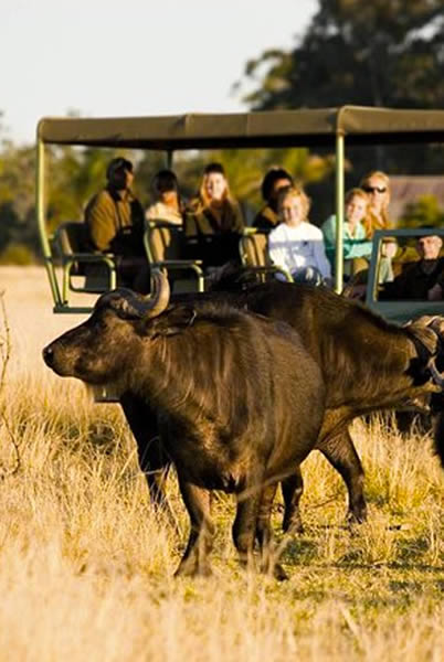 Image of a game drive at Plettenberg Bay Game Reserve inside the Belle Balance Bush Hideaway home page of the website