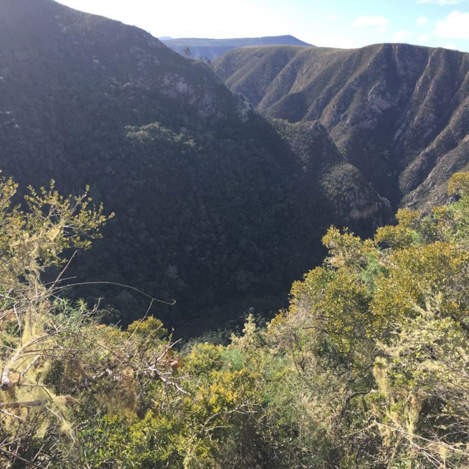 Forest trail walk Belle Balance